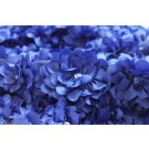 Flower and Sequin Applique on Silk Chiffon - Blue