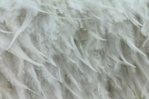 Ivory (Natural) Feathers on Silk Chiffon