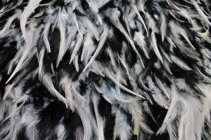Black and White Feathers on Silk Chiffon