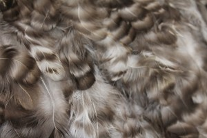 Mottled Grey and Brown Feathers on Silk Chiffon